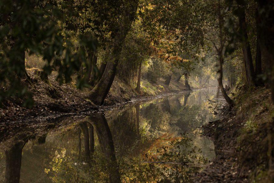 Canale nel bosco